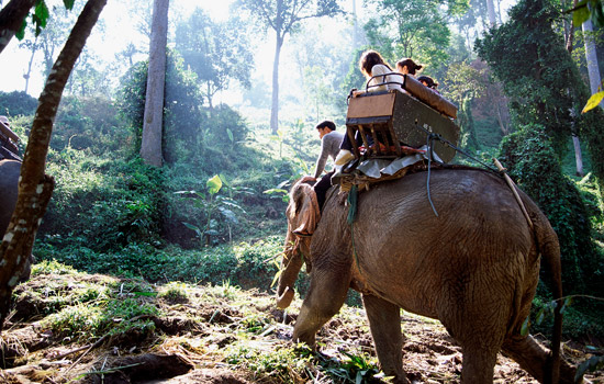 never ride elephant in thailand